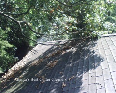 Cumming's Best Gutter Cleaners does tree pruning of limbs coming in range of the gutters.